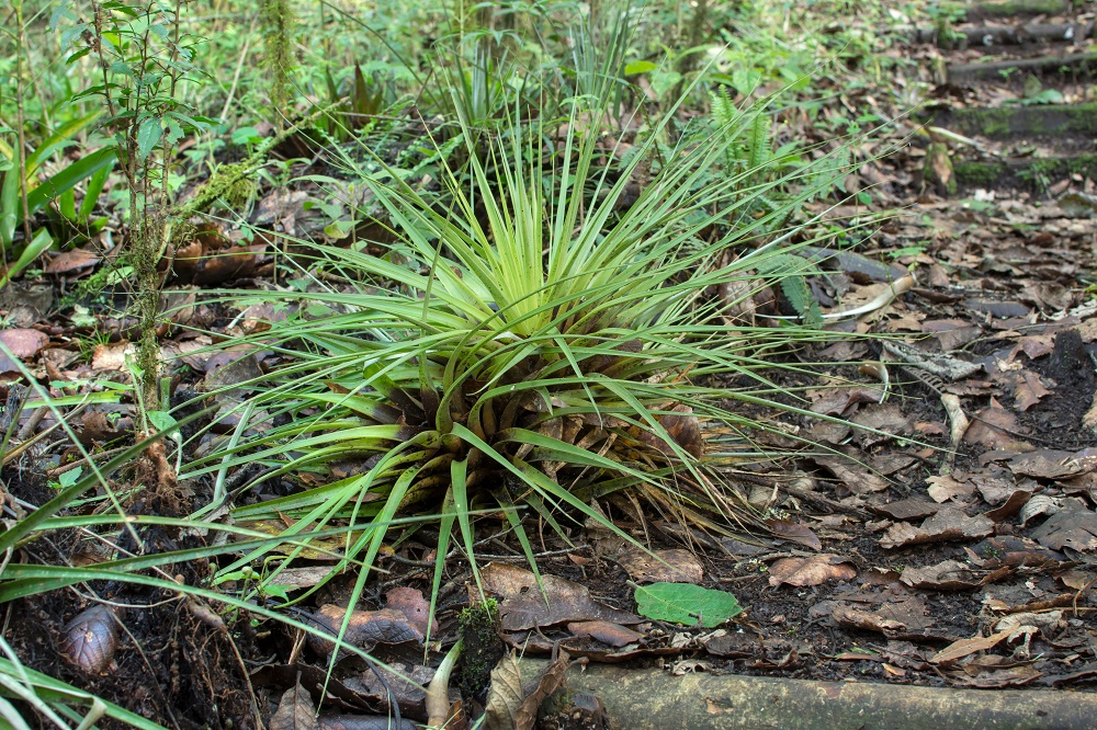 air plant in forest