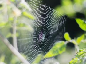 plants to keep spiders away
