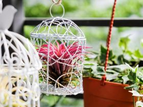 can air plants live outside